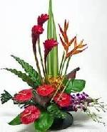 Exotic orchids, Anthurium and Bop arranged